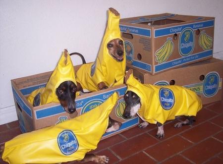 banana doggies