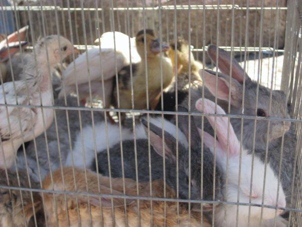 bunnies-and-chicks.jpg
