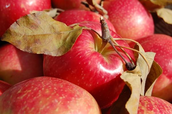 mt-pleasant-farmers-market-2008-7-600-x-398.jpg