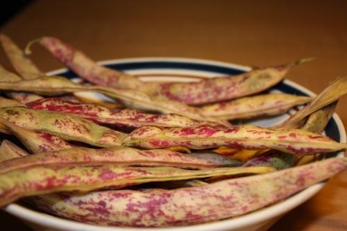 cranberry-beans.JPG
