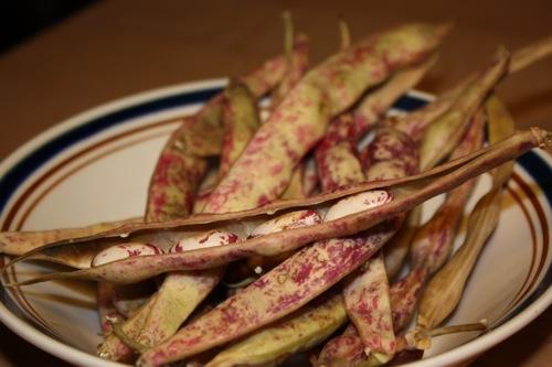 inside-cranberry-beans.JPG