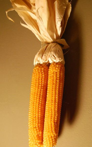 popcorn-1-new-375-x-600.jpg