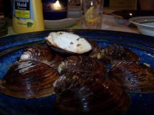 Mahogany shells