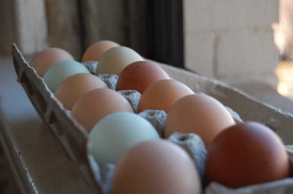 multi-colored-eggs-1-600-x-398