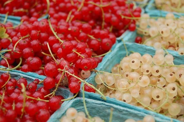 mt-pleasant-farmers-market-2009-3-600-x-398