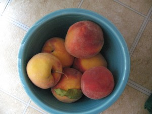 Bowl o' peaches