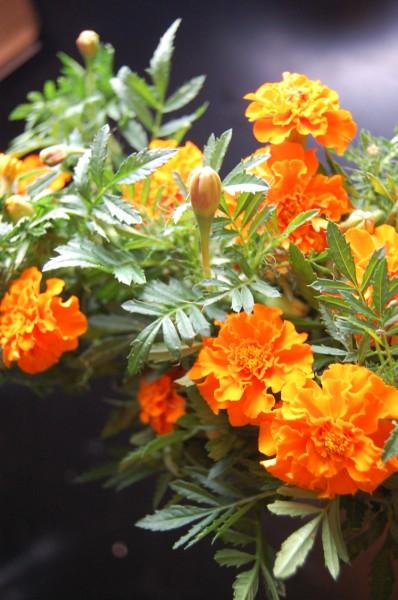 flowers-1-398-x-600
