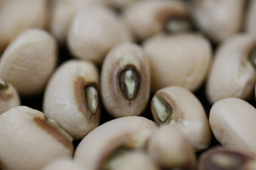 800px-Black-eyed-pea-close