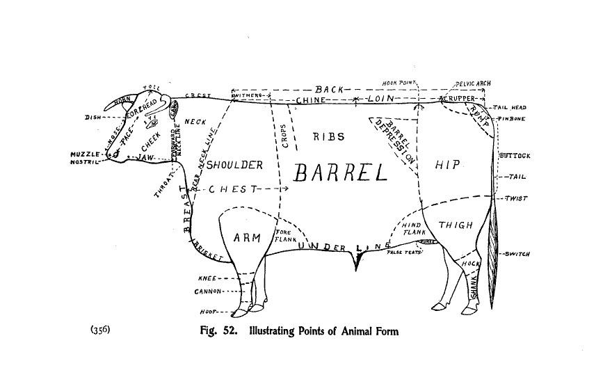 Animal-Range-and-Farm-Cow-Diagram-for-butchering-1
