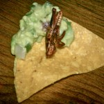 grasshopperchip