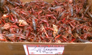 LiveCrawfish